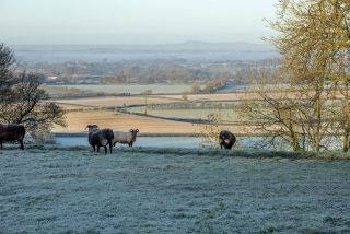 View across a valley of farmland to the hills in the distance with sheep on frosty fields in the foreground.