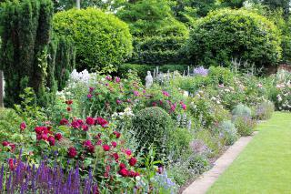 Roses and Salvias in June