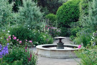 Roses and herbaceous planting in June
