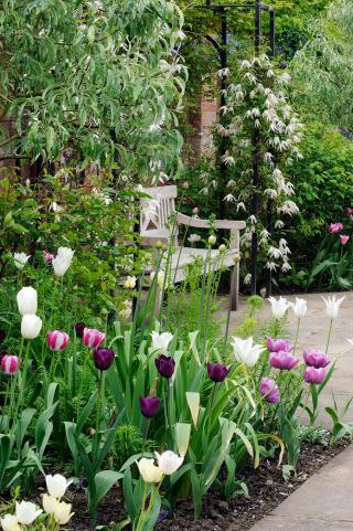 Tulip display in May